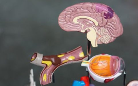 Research studies if the retina can identify and predict dementia in diabetes patients
